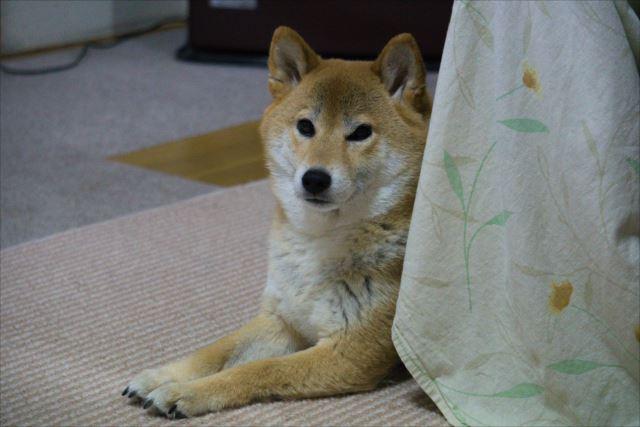 ペット可物件はなぜ飼育可能となっているのか背景を確認しよう